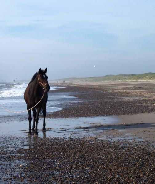 walk pa stranden