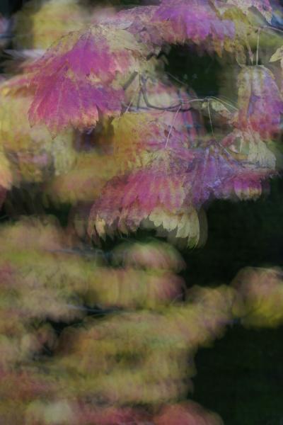 bevaegelse positionsaendring forskydning blad makrooptagelse naerbillede
