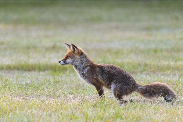 makrooptagelse naerbillede dyr pattedyr mark vagtsom