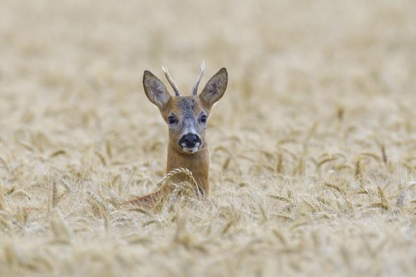 makrooptagelse naerbillede dyr pattedyr nysgerrighed mandlig