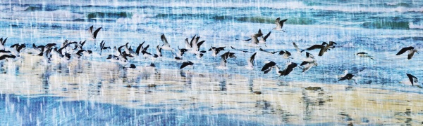 landscape, with, seagulls, on, the, beach - 28215155