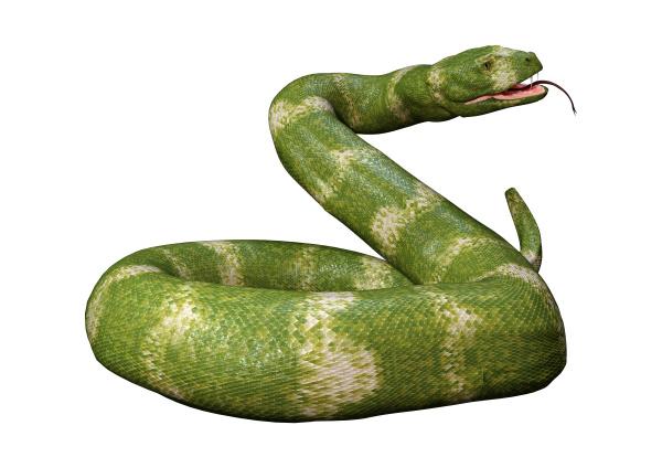 3d, rendering, viper, snake, on, white - 28217973