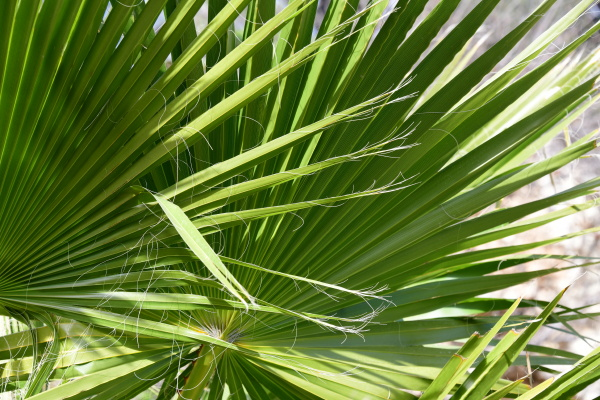 palm, leaves, in, the, province, of - 28217767