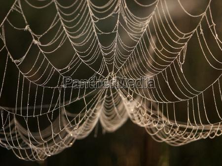 vaerktoj insekter dyr udendorsoptagelse modlys edderkop