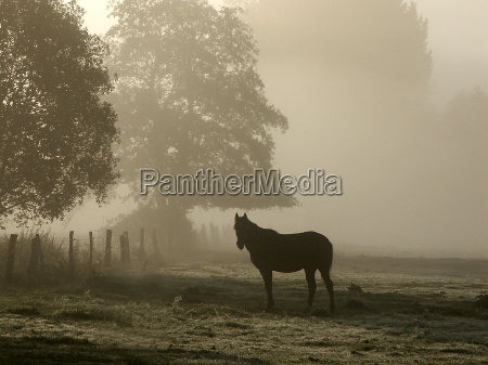 trae traeer hest tage dis solopgang