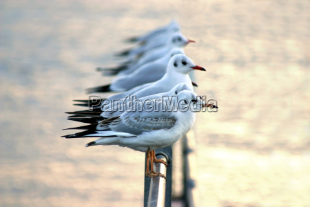 fugl fugle bolger sollys udendorsoptagelse modlys