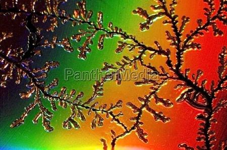lys makrooptagelse close up naerbillede farve