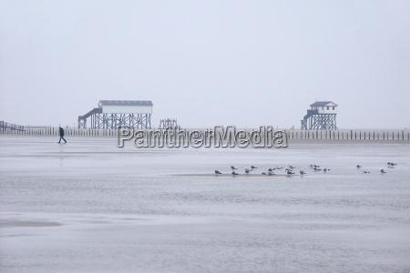horisont fugl menneske strand seaside stranden