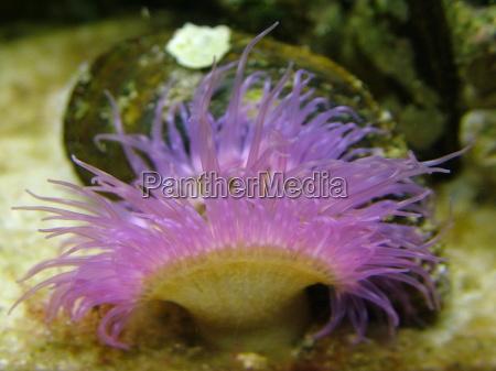 tentacles in pastel