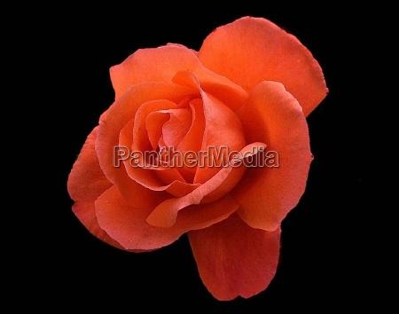 lys makrooptagelse close up naerbillede blomst