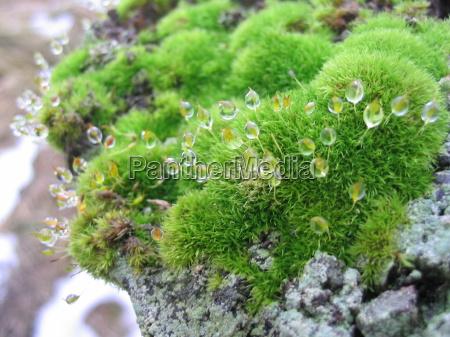 makrooptagelse close up naerbillede vade dugdrabe