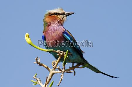 bla fugl gron gront gronne nationalpark