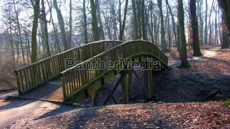 luz arbol arboles parque invierno madera