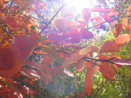 lys blade efterarsagtig efterars modlys efterarsblade