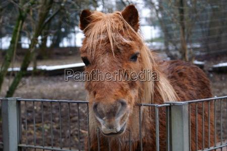 hest dyr mund oje organ ojne