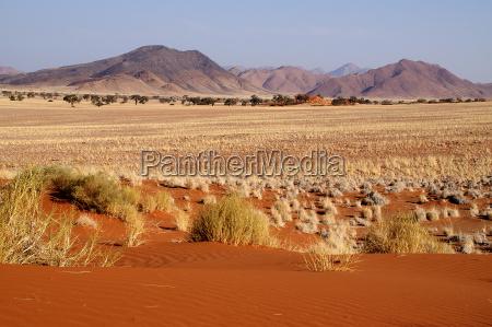 trae traeer bjerge orken afrika namibia