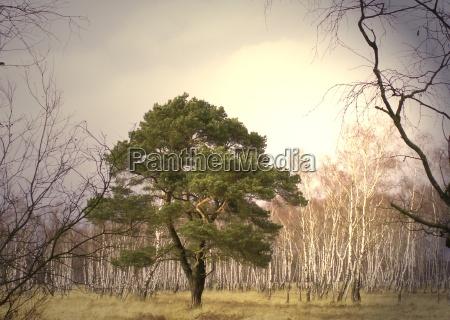 luz arbol arboles verde tronco ramas