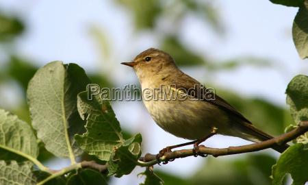 dyr fugl fugle songbird sangfugle