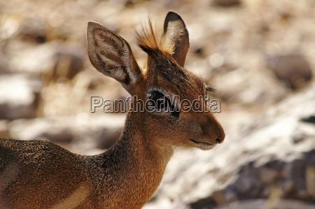 nationalpark afrika namibia oje organ steppe