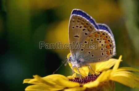 makrooptagelse close up naerbillede insekt blomstre