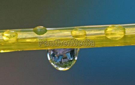 makrooptagelse close up naerbillede regndrabe torresnoren