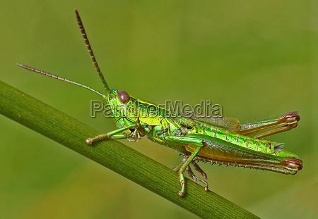 makrooptagelse close up naerbillede insekt insekter