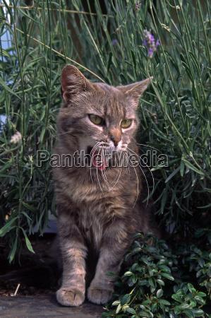 kaeledyr husdyr katte iagttagelse overskaeg skjulte