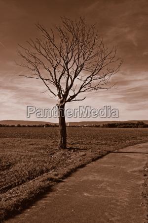 trae traeer blade mark grene gren