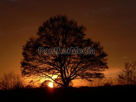 natur, træer - 482010