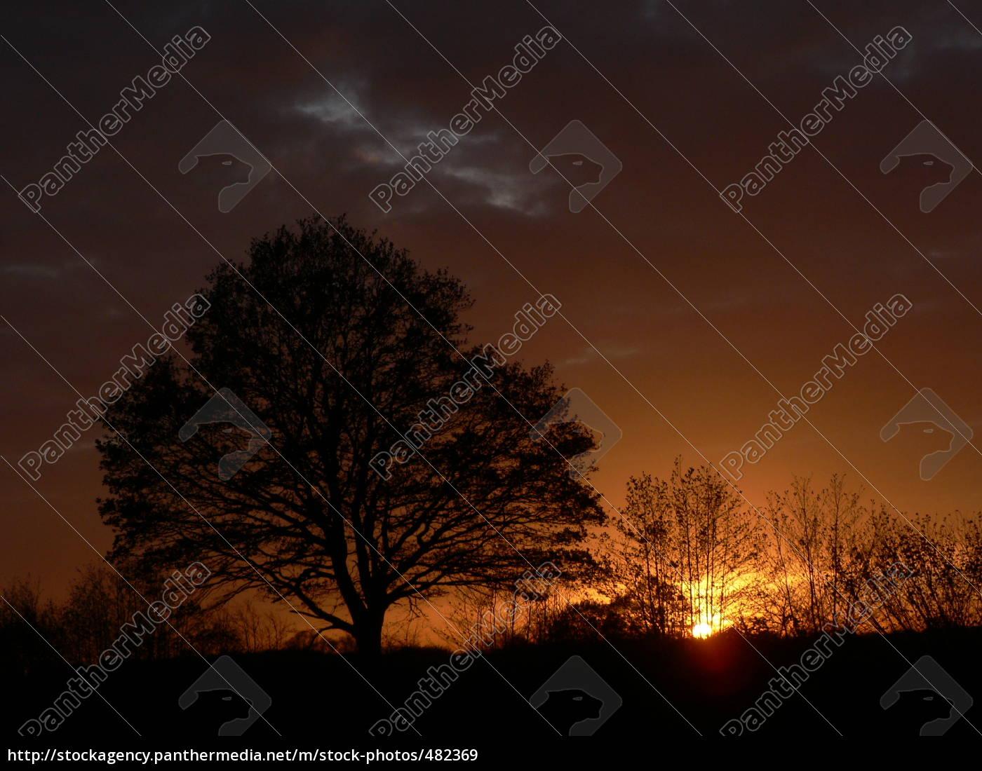 natur, træer - 482369