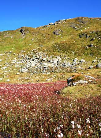 tyrolske alpine eng