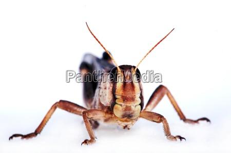makrooptagelse close up naerbillede insekt brun