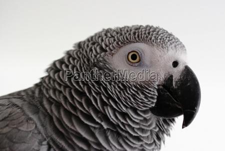 dyr husdyr kaeledyr fugl fugle se