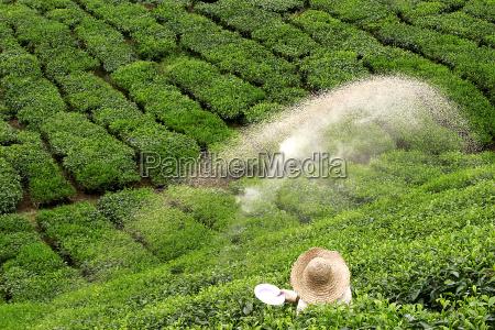 bauer spreder godning pa gron te
