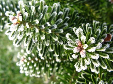 vinter kold koldt moden frost frostvejr