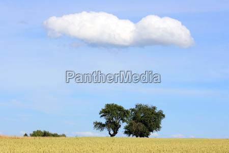 traeer med sky og hvedemark