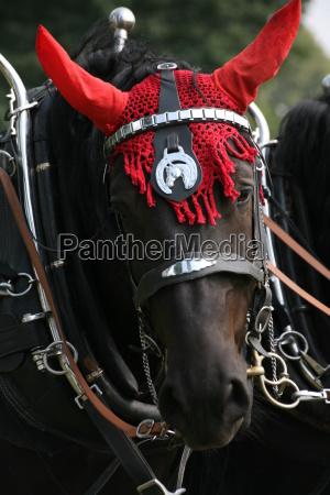 hest dyr staerk landbrug sort dybsort
