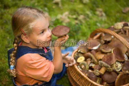 indsamling af svampe
