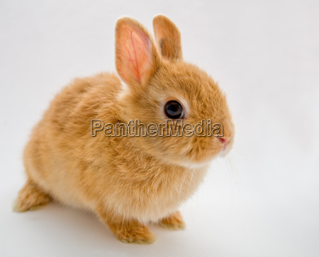 brun hare gra hare hanhare beige