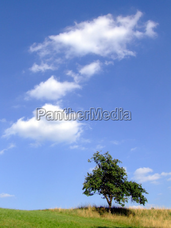 bla trae sommer sommerlig aebletrae himmel