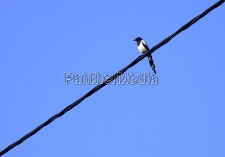 vente afvente ventetid bla fugl fugle
