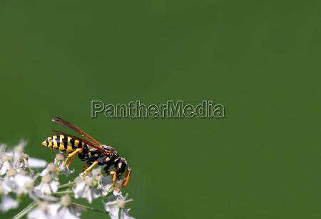 insekt sort dybsort kulsort natsort hveps
