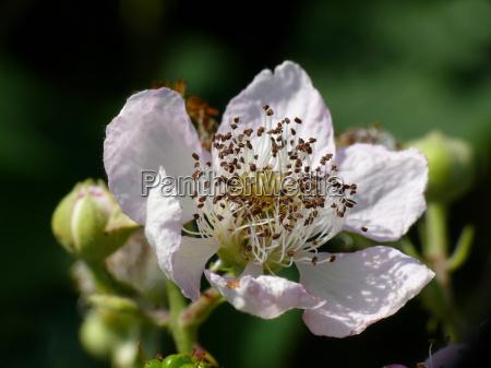 have blomstre blomstrende blade sommer sommerlig