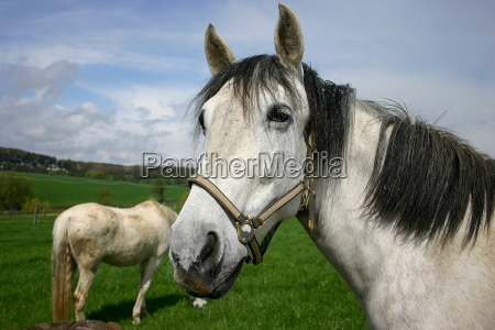 passeio cavalo cabecada olhar vista acoplador
