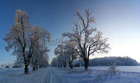 trae traeer vinter kaukasisk hvid europid