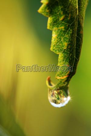 blad makrooptagelse close up naerbillede gron