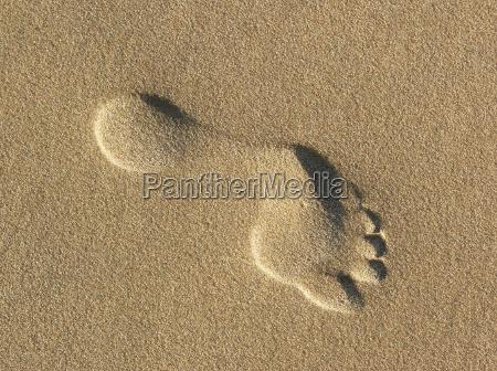 barfodet spor fodspor fodaftryk