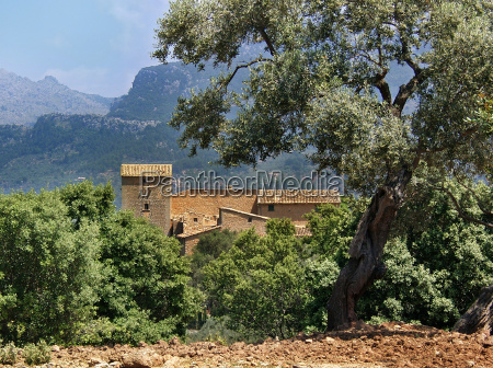 mallorca spanien country house stuehus oliventrae