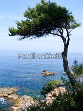 fyr, ved, middelhavet - 1864779