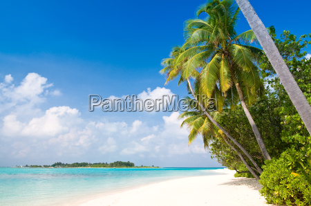 ferie strand seaside stranden kysten maldiverne